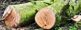 Tree Felling and Cutting Service